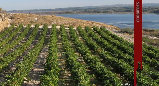 1907: Appellation Corbières - Achat Vin de Corbières Languedoc