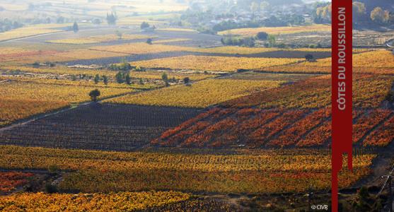 1907: Appellation Côtes du Roussillon - Achat Vin Languedoc Roussillion