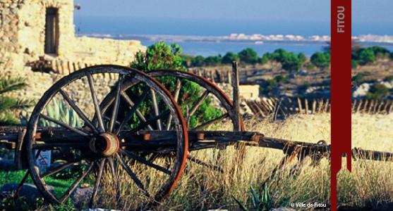 1907: Appellation Fitou - achat et vente de  vin  du Languedoc Roussillion