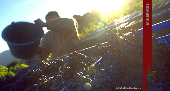1907: Appellation Minervois - Achat Vin du Languedoc Roussillion
