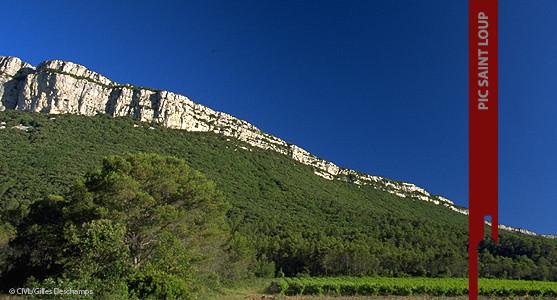 1907: Appellation Pic saint Loup - Achat Vin du Pic Saint Loup - Languedoc