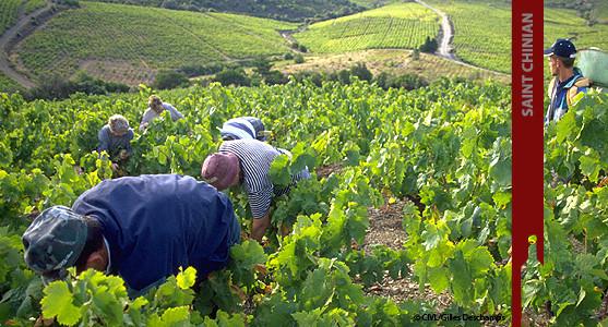 1907: Appellation Saint Chinian - achat et vente de  vin  du Languedoc Roussillion
