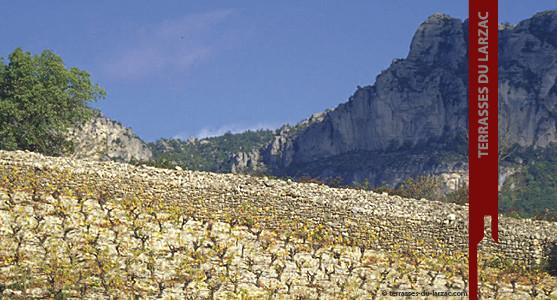 1907: Appellation Terrasses du Larzac - Achat Vin des Terrasses du Larzac - Languedoc