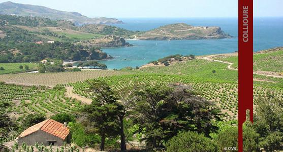 1907: Appellation Collioure - Achat Vin de Collioure - Roussillon