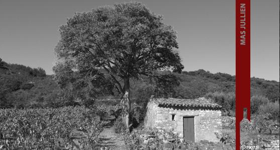 1907: Mas Jullien - Les Vins d'Olivier Jullien en Languedoc - Acheter les Vins du Mas Jullien