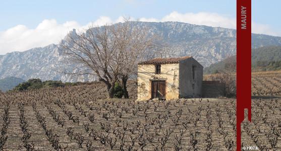 1907: VDN Maury - Achat Vin Doux Naturel de Maury - Roussillion