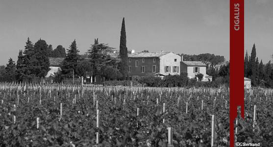 1907: Cigalus - Gérard Bertrand - Languedoc - Acheter les Vins du Cigalus