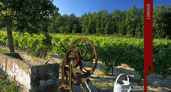1907: Appellation Limoux - Achat Vente Vin du Languedoc Roussillion