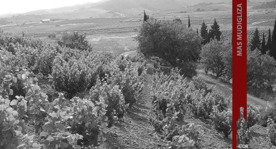 1907: Mas Mudigliza - Maury - Acheter les Vins du Mas Mudigliza