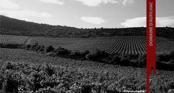 1907: Domaine d'Aupilhac - Montpeyroux - Acheter les Vins du Domaine Aupuilhac