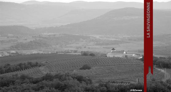 1907: Domaine la Sauvageonne - Terrasses du Larzac - Achat Vin Languedoc Roussillon.