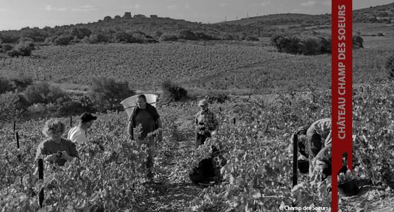 1907: Château Champ des Soeurs - Fitou - Corbières - Achat Vin Languedoc Roussillon