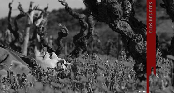1907: Clos des Fées - Roussillon - Acheter les Vins du Clos des Fées