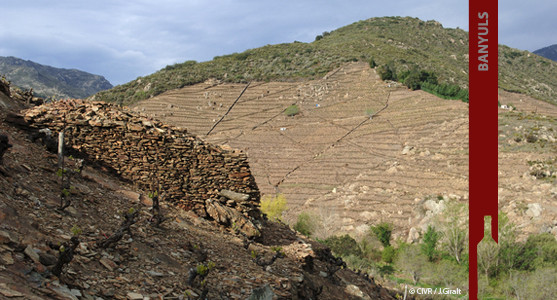 1907: VDN Banyuls - Achat Vin Doux Naturels Banyuls Roussillion